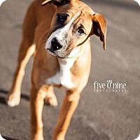 Adopt A Pet :: Romeo - La Crosse, WI