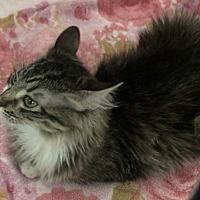 Adopt A Pet :: Pixie - Lancaster, CA