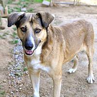 Adopt A Pet :: Martin Ray - Tanner, AL
