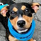 Adopt A Pet :: Kasha *Adopt*