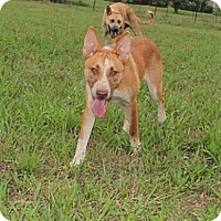 Adopt A Pet :: Emily--Reduced fee $200 - Hagerstown, MD