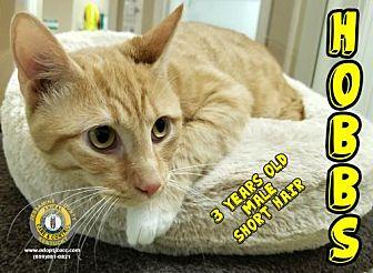 Adopt A Pet :: Hobbs  - Nicholasville, KY