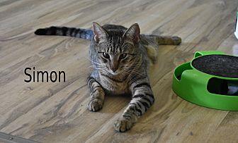 Adopt A Pet :: Simon  - Concord, NC