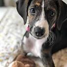 Adopt A Pet :: Dim Sum