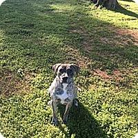 Adopt A Pet :: PANDORA - Marshfield, MA