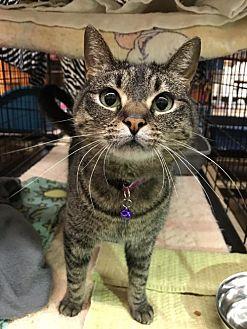 Adopt A Pet :: Hope  - Blasdell, NY