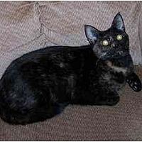 Adopt A Pet :: Polly - Stuarts Draft, VA