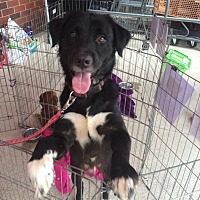 Adopt A Pet :: Panda - Acworth, GA