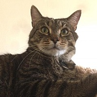 Adopt A Pet :: Earl - Worcester, MA