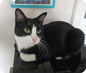Adopt A Pet :: Clifford  - Troy, MI