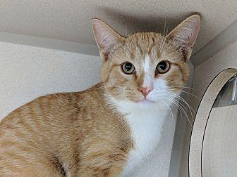 Adopt A Pet :: Vern  - Laramie, WY