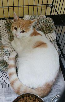 Adopt A Pet :: Ivan  - Mt Vernon, IN