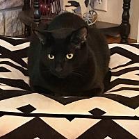Adopt A Pet :: Vadar - Princeton, MN