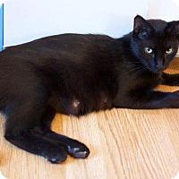 Adopt A Pet :: Ruby - Putnam, CT
