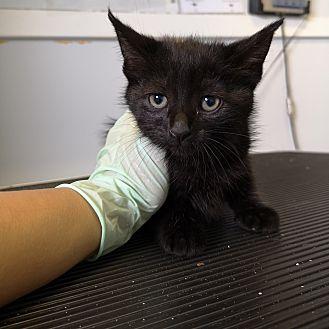 Adopt A Pet :: Onyx  - Moose Jaw, SK
