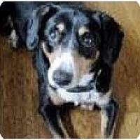 Adopt A Pet :: Jezebel - Madison, WI