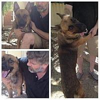 Adopt A Pet :: Lobos - Phoenix, AZ