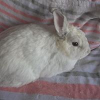 Adopt A Pet :: Erin - Idaho Falls, ID