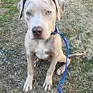 Adopt A Pet :: Manford 💚 DOB 5/27/17!