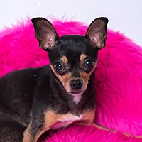 Adopt A Pet :: Pearl - Kenner, LA