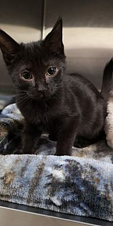 Adopt A Pet :: Tiggy  - Moose Jaw, SK