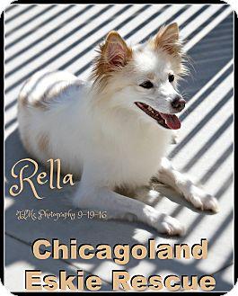 Spitz (Unknown Type, Small) Mix Dog for adoption in Elmhurst, Illinois - Rella
