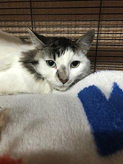 Adopt A Pet :: Ava  - Moose Jaw, SK