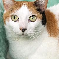 Adopt A Pet :: Missy - St Louis, MO