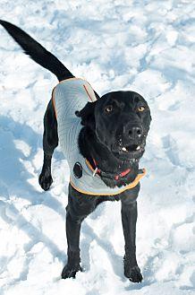 Adopt A Pet :: Bo  - Moose Jaw, SK