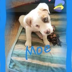 New Hope Dog Rescue in Saskatoon, Saskatchewan
