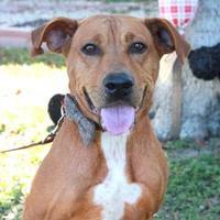 Adopt A Pet :: RAELYN - Kyle, TX