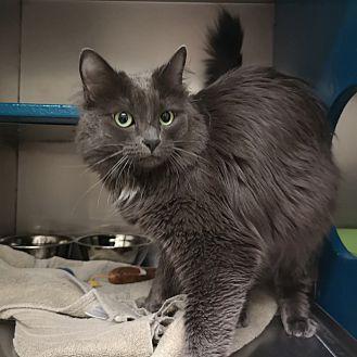 Adopt A Pet :: Trudy  - Moose Jaw, SK