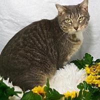 Adopt A Pet :: Mandie Sue - St. Cloud, FL