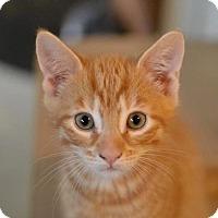 Adopt A Pet :: Oswald - Poughkeepsie, NY