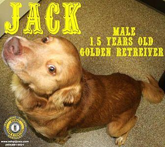 Adopt A Pet :: Jack  - Nicholasville, KY