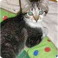 Adopt A Pet :: Mena - Strathmore, AB