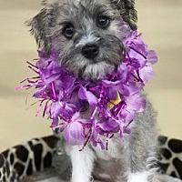 Adopt A Pet :: Steve D4128 - Fremont, CA