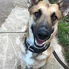 Adopt A Pet :: Clarke