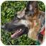 Photo 3 - German Shepherd Dog Dog for adoption in Los Angeles, California - Franz von Scholl