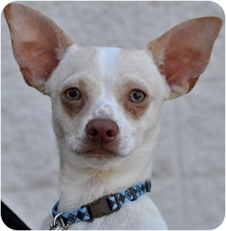 Greyhound Dog Adoption Nc