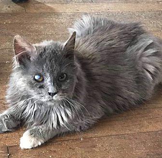 Adopt A Pet :: AUBREE  - Northwood, NH
