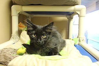 Adopt A Pet :: Fluffy  - Germantown, TN