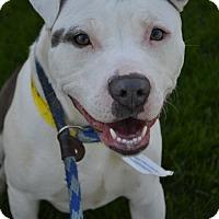 Adopt A Pet :: Venus - Toledo, OH