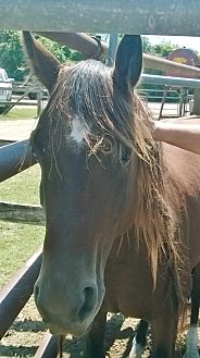 Quarterhorse Mix for adoption in Hitchcock, Texas - Charmaine