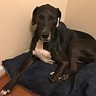 Adopt A Pet :: Annie (COURTESY POST)