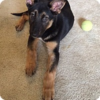 Adopt A Pet :: Duke - Long Beach, CA