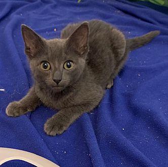 Adopt A Pet :: Thunder  - Dumfries, VA