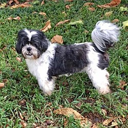 Puppies for Sale in Florida - Adoptapet com