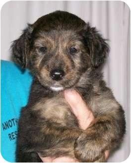 Conesus Ny Golden Retriever Meet Amber A Pet For Adoption