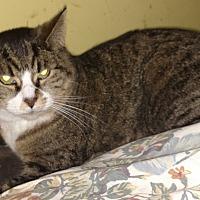 Adopt A Pet :: Lilly - Benton, PA